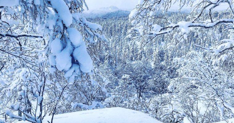 雪の匂いを嗅ぎながら